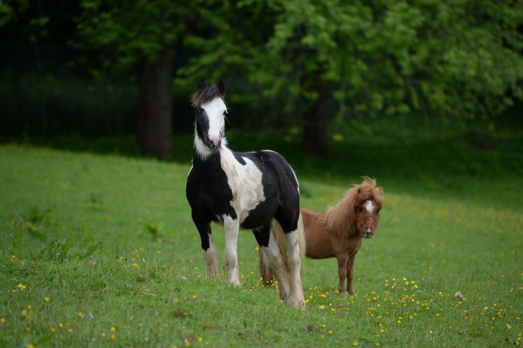 mare-foal-sanctuary-ludo-didymus-devon-supporter-pledge