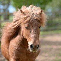 mare-foal-sanctuary-adoptions-dipsybell