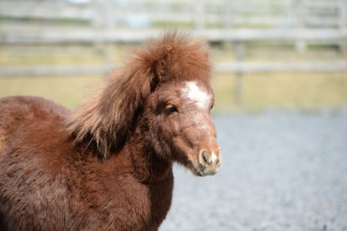 mare-foal-sanctuary-sir didymus-adoptions