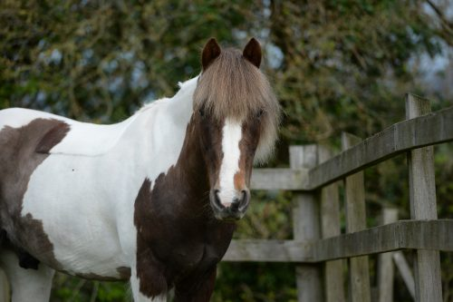 mare-foal-sanctuary-adoptions-william