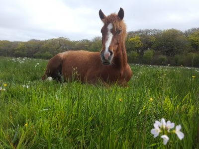 mare-foal-sanctuary-devon-horse-welfare