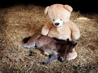 horse-pony-charity-devon-about-us-foal