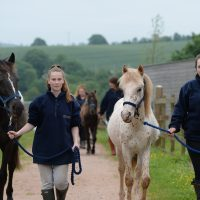 mare-foal-sancruary-devon-volunteers-career-university-jobs