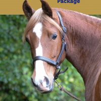 mare-foal-sanctuary-Devon-corporate-sponsorship
