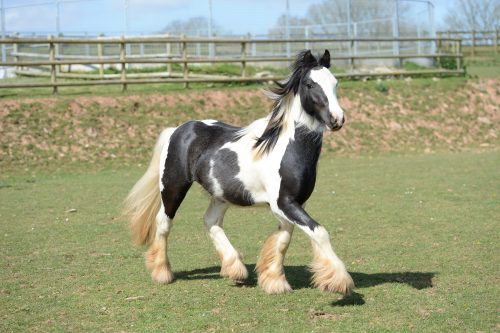 mare-foal-sanctuary-devon-ludo-adoptions