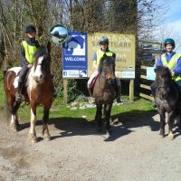 mare-foal-sanctuary-devon-road-safety-coombe park