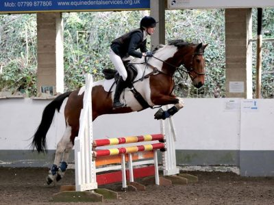 horse-pony-charity-devon-show-jumping-competitions