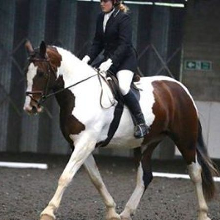 Open Unaffiliated Dressage Summer Fun Series