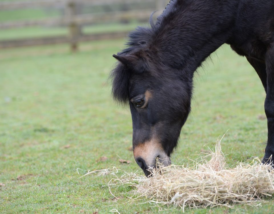 mare-foal-sanctuary-devon-april-adoption-pony-coombe-park
