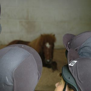 mare-foal-sanctuary-devon-happy-hooves-easter-horse-wise-coombe-park