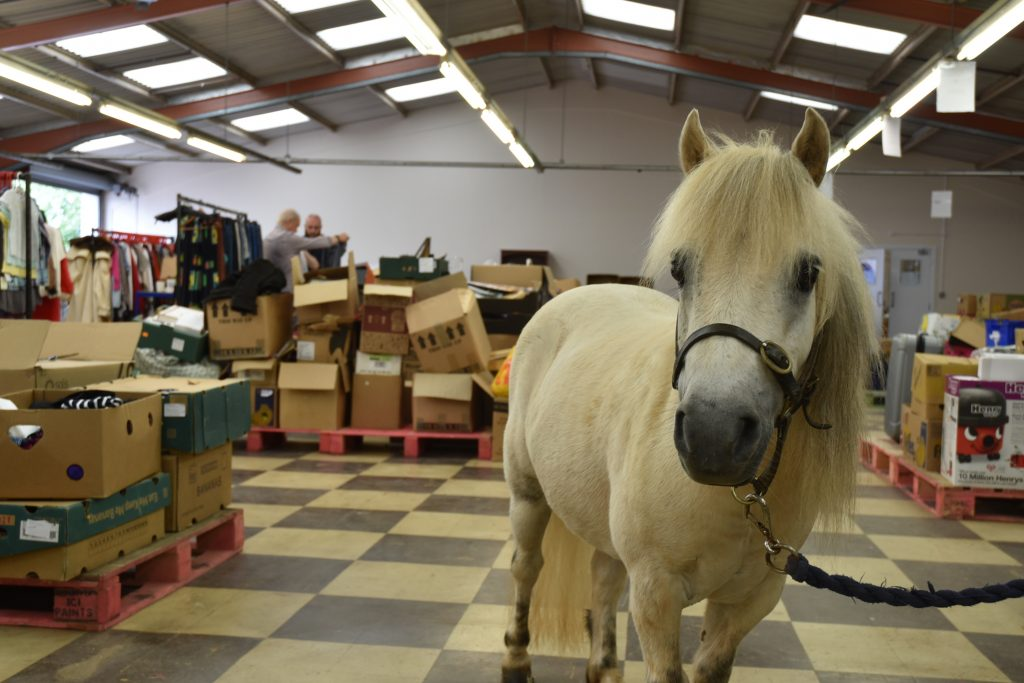 mare-foal-sanctuary-reuse-recycle-devon-newton-abbot-grand-opening
