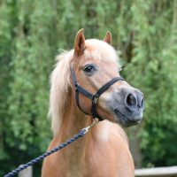 south-manor-appeal-old-pony-charity-saffy