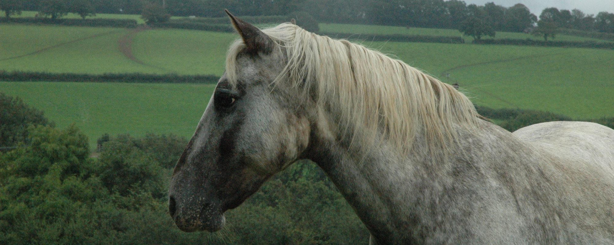 horses-ponies-you-help-rescue-this-year-aura