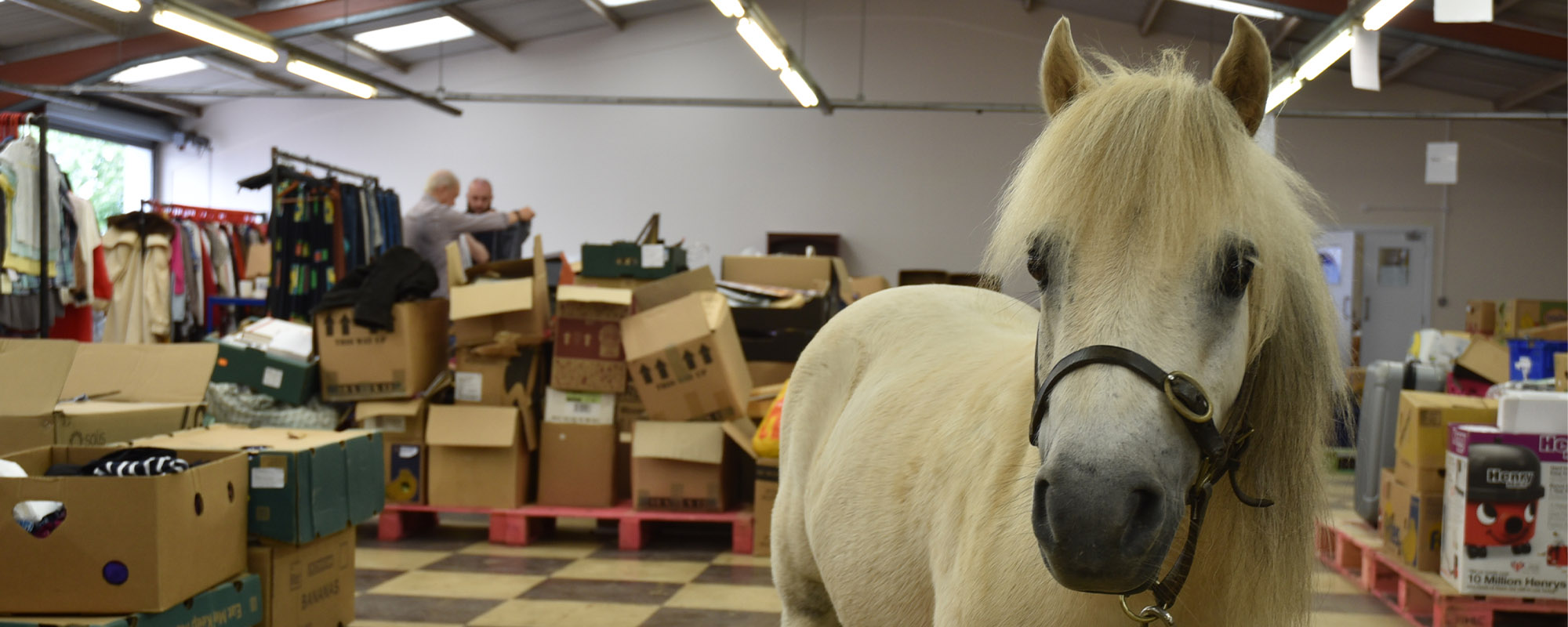 horses-ponies-you-help-rescue-this-year-joker
