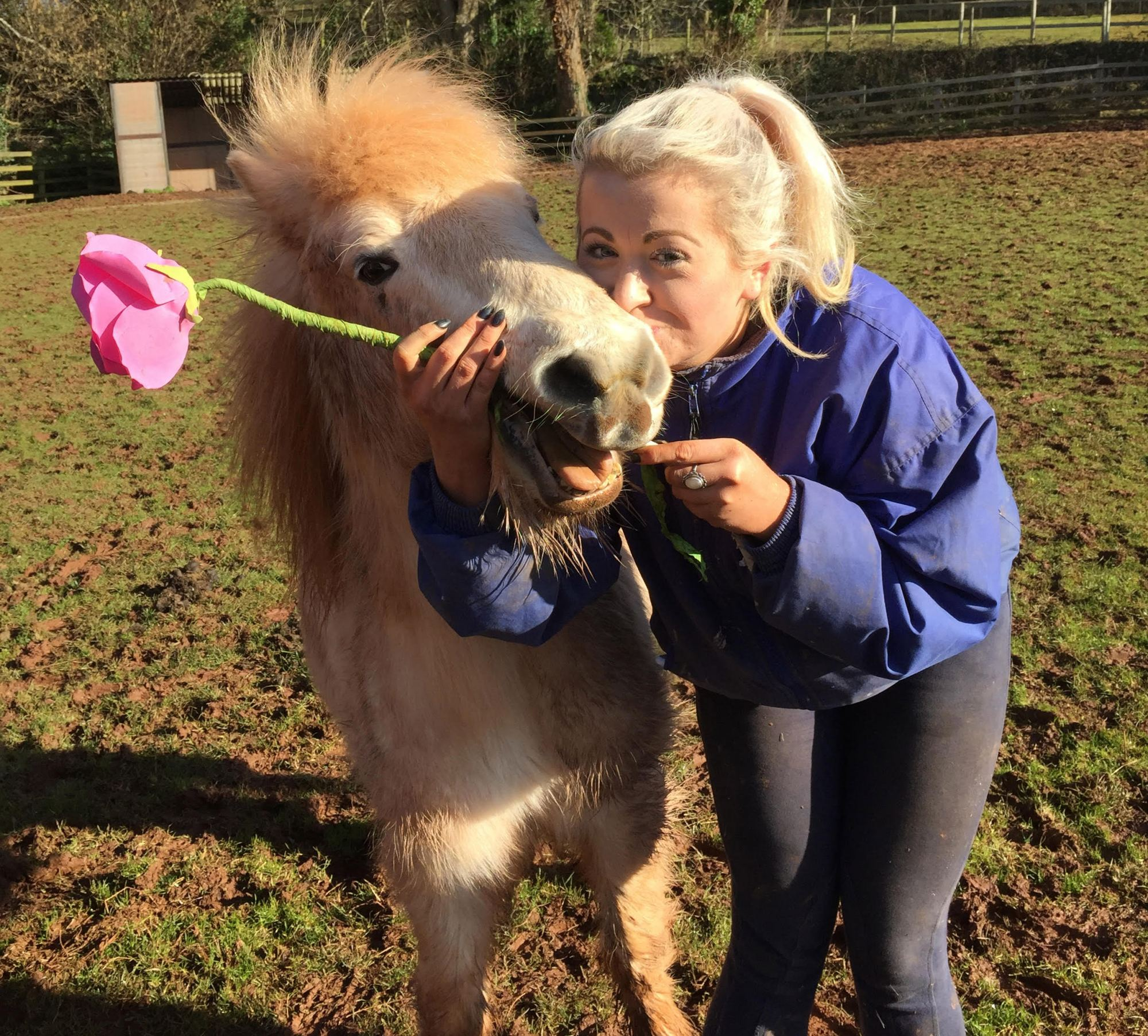 horses-ponies-you-help-rescue-this-year-dillon