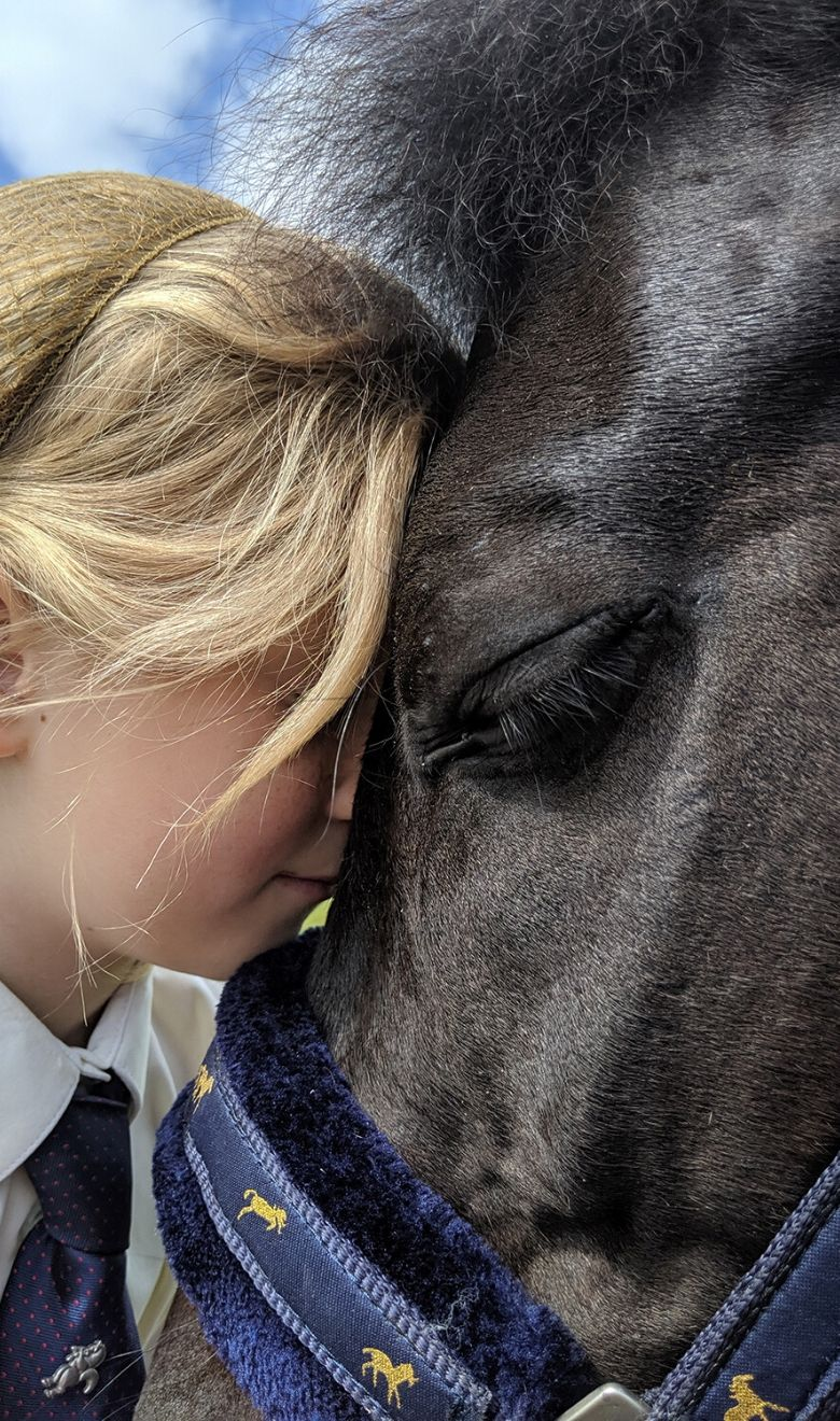 rehoming-horse-pony-charity