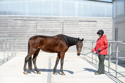 Horse called Sammy rescued by the Sanctuary