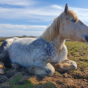 vogue-relaxing-pony-sanctuary-rescued
