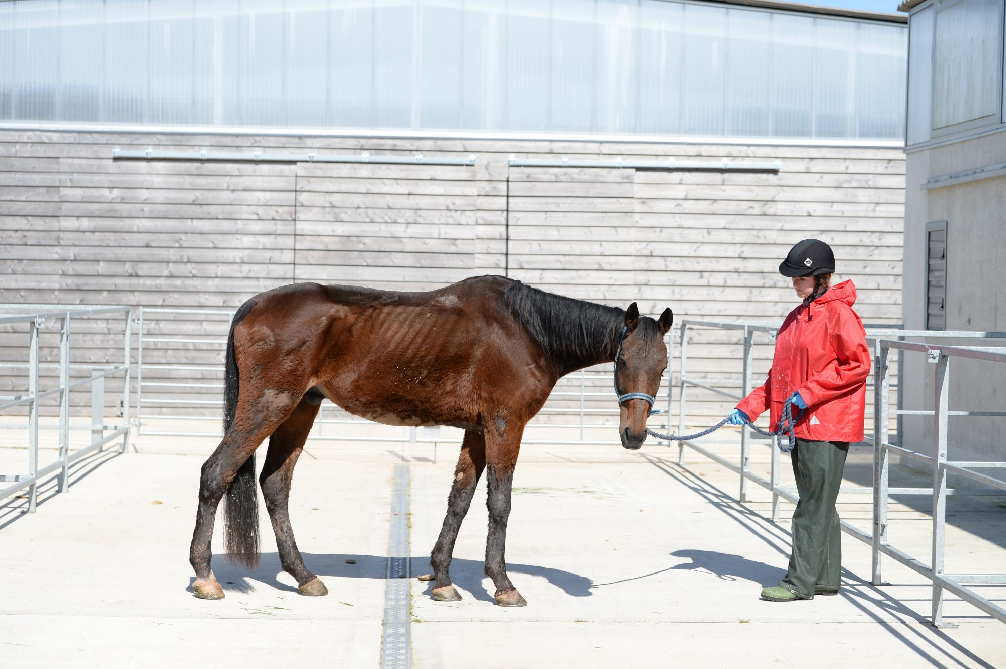 sammy-thoroughbred-horse-rescue-neglect