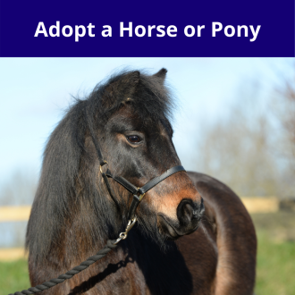 Adopt a Horse or Pony