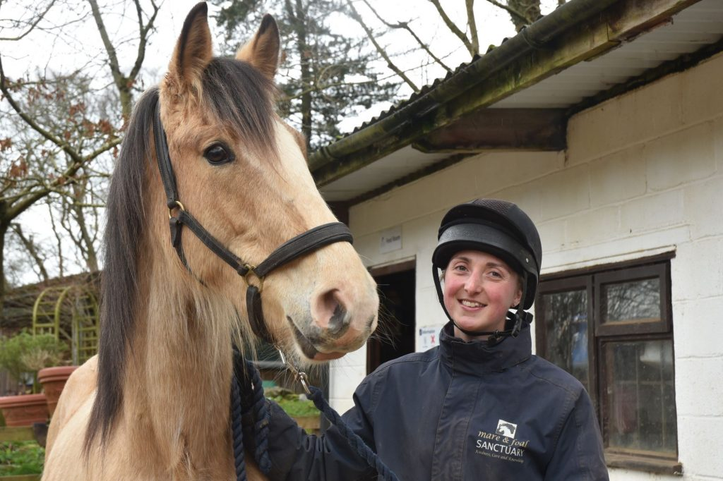 special-homes-socialise-train-horses-Diangelo
