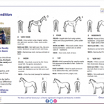 Body-condition-score-chart-download-advice-equine-weight-management