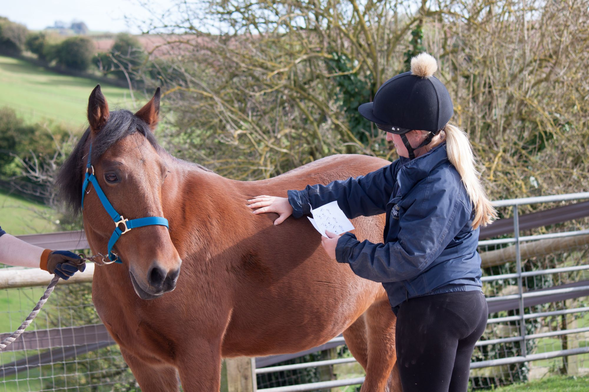 Pony-Iona-groom-equine-weight-management-body-condition-score-chart