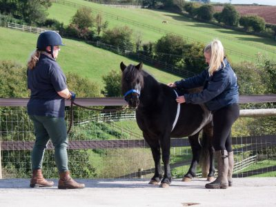 equine-weight-management-weight-tape-pony-Toffee