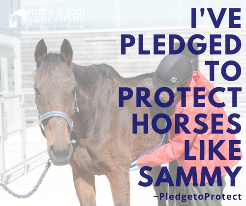 Pledge-to-protect-campaign-horse-sammy