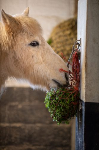 Enrichment-Horse-Cochise-Sticky-weed-Haynet-Stable